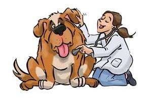 Diagnostico veterinario